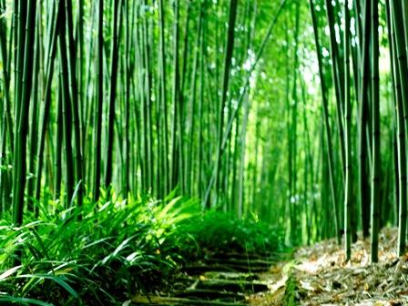 竹林3.jpg